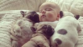 Όταν τα μωρά ενοχλούν τα σκυλάκια τους το αποτέλεσμα είναι ξεκαρδιστικό!